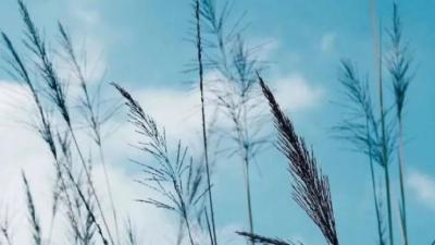 周溪| 途经生命的风