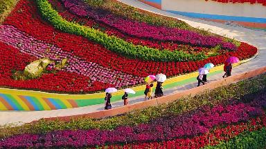 """春天,来梅州赴一场""""花之约"""""""