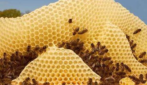 """小蜜蜂酿出富民产业 来看蕉岭蜂农如何创""""甜蜜事业"""""""
